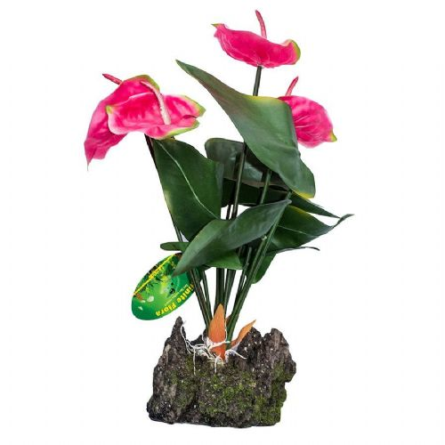 LR Anthurium Pink 50cm IF-32 PLP162
